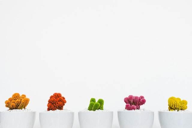 peluang usaha rumahan - penyewaan tanaman hias